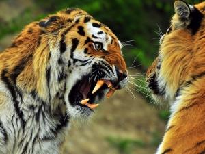 Animals_Beasts_Animal_fight_021154_