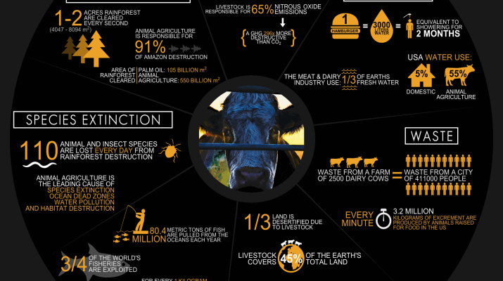 cowspiracy-infographic-metric-715x400